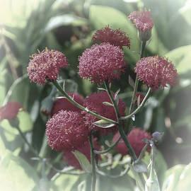 Lynn Bolt - Dreamy Red Flowers