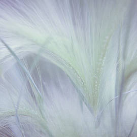 Jenny Rainbow - Dreamy Softness. Pastel Grasses