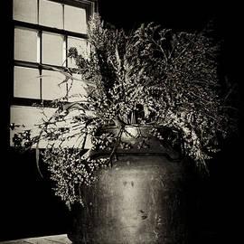 Nikolyn McDonald - Dried Arrangement - Window Light