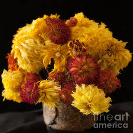 Ann Jacobson - Dried Dahlias and Chrysanthemums