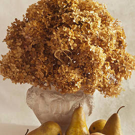 Sandra Foster - Dried Hydrangeas And Pears Still Life