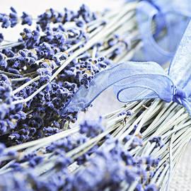 Elena Elisseeva - Dried lavender