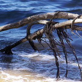 Lindy Whiton - Driftwood at Inverness