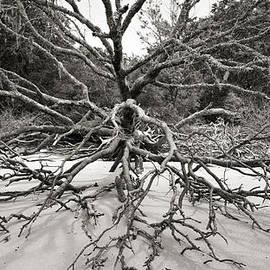 Barbara Kraus - Northrup - Driftwood