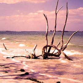 Rosalie Scanlon - Driftwood by the Sea