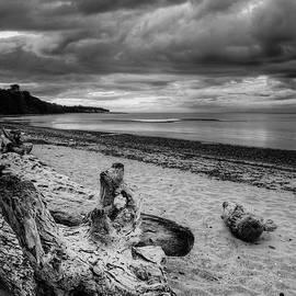 Ken McAllister - Driftwood