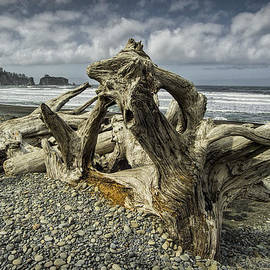 Randall Nyhof - Driftwood on Rialto Beach in Olympic National Park No. 144