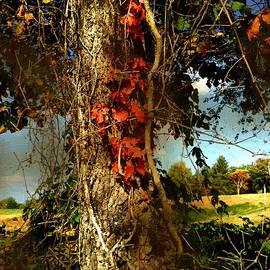 RC deWinter - Druid Oak