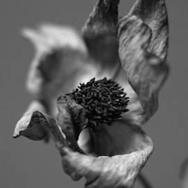 Marcio Faustino - Dry flower