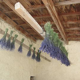 Pema Hou - Drying Lavender