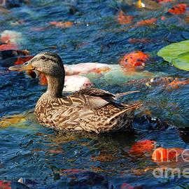 Eva Kaufman - Duck among Koi