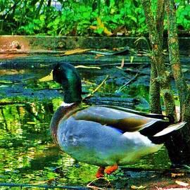 Chuck  Hicks - Duck