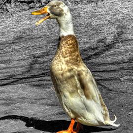 John Straton - Duck I Can Sing