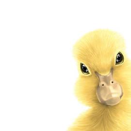 Veronica Minozzi - Duck