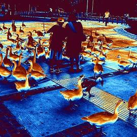 Anand Swaroop Manchiraju - Ducks Ducks And Ducks-3