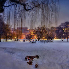 Joann Vitali - Ducks in Boston Public Garden in the Snow