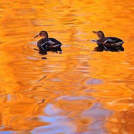Jenny Rainbow - Ducks on the Golden Waters