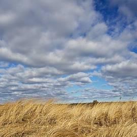 Allan Morrison - Dune grass and sky