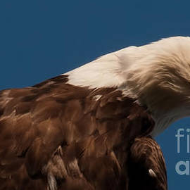 Rachel Hauswirth - Eagle Eye