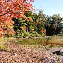 David Birchall - Eagle Lake Autumn