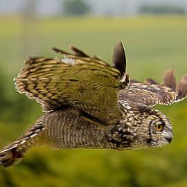 Dave Cawkwell - Eagle Owl in Flight