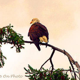 Tap On Photo - Eagle Watch