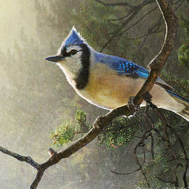 R christopher Vest - Early Bird American Blue Jay