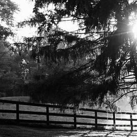 Deborah Fay - Early Morning
