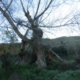 Colette V Hera  Guggenheim  - Early morning January wild mountain Nature in Spain
