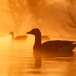 Roeselien Raimond - Early Morning Mood