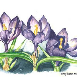 Cindy Lenker - Early Spring Crocus