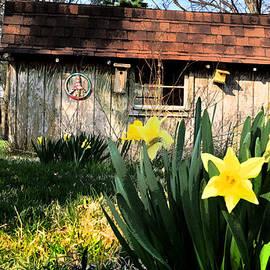 Steve Archbold - Early Spring in the Backyard