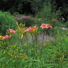 MTBobbins Photography - Early Summer Garden