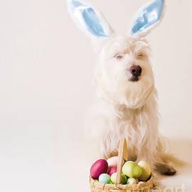 Edward Fielding - Easter Bunny Westie