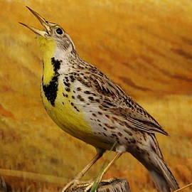 Larry Trupp - Eastern Meadowlark