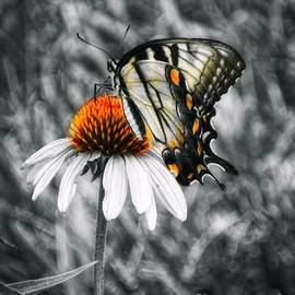 Sharon Woerner - Eastern Swallowtail Butterfly