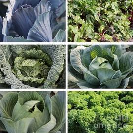 Carol Groenen - Eat Your Greens