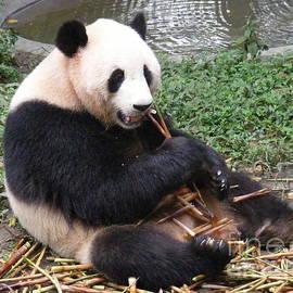 Noa Yerushalmi - Eating Panda