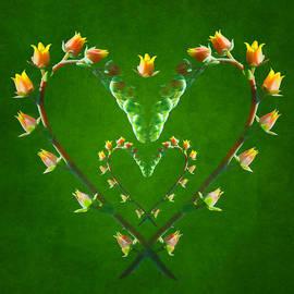 Nikolyn McDonald - Echeveria Hearts