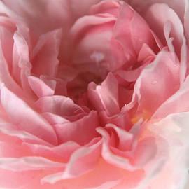 The Art Of Marilyn Ridoutt-Greene - Echoes of Love