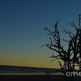 Randy Edwards - Edisto Island Boneyard Beach