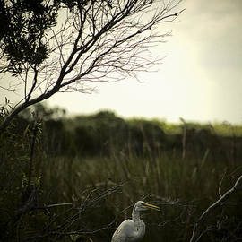 Bradley R Youngberg - Egret At Sunset