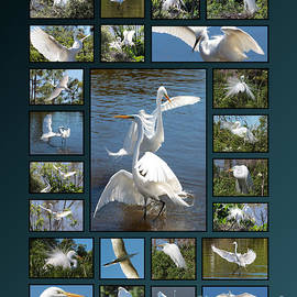 Carol Groenen - Egret Collage