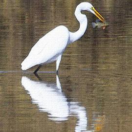 Tom Janca - Egret Eats Fish