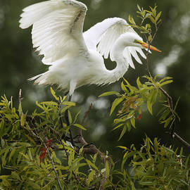 Joseph G Holland - Egret Launch