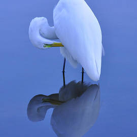 Forwen DelaRosa - Egret Reflection