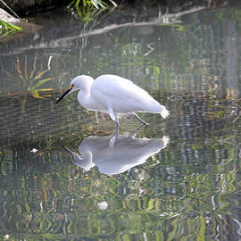 Jeff Tuten - Egret Reflection