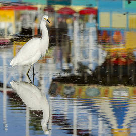 Bruce Frye - Egret Reflections- 1