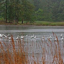 Suzanne Stout - Egrets in the Rain
