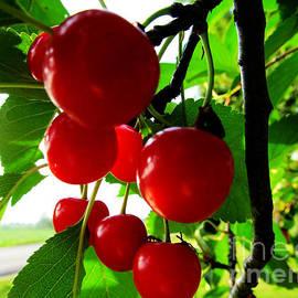 Tina M Wenger - Eight Ripe Cherries